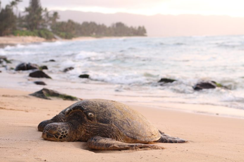 Hundreds of dead turtles found on Mexican coast