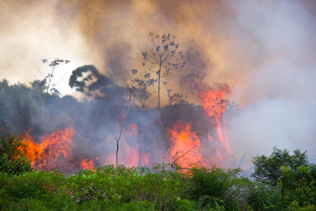 Bolsonaro blames NGOs for Amazon fires