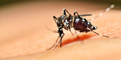Dengue fever surge Latin America
