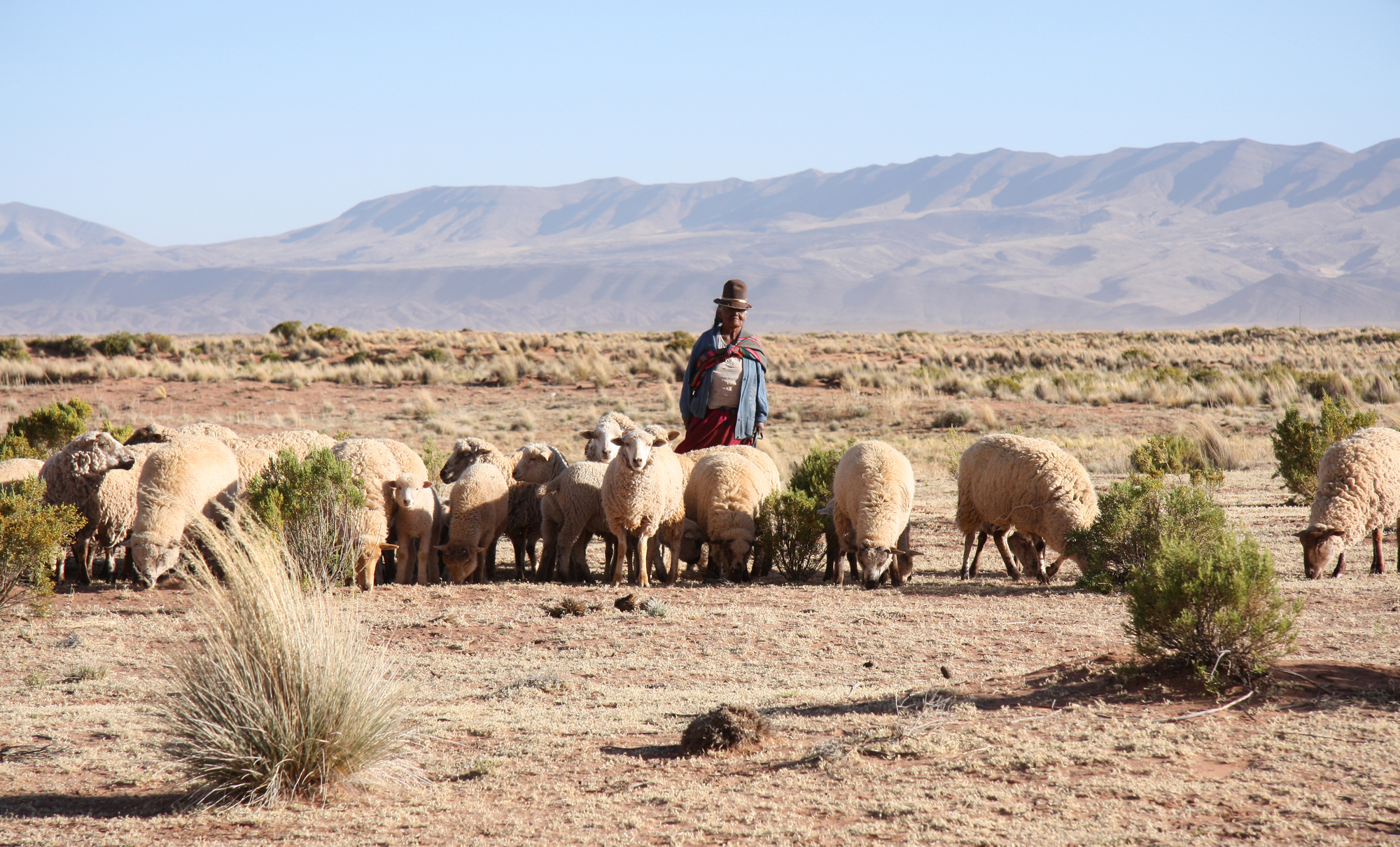 How Bolivia's answer to Rappi supports small-scale farmers