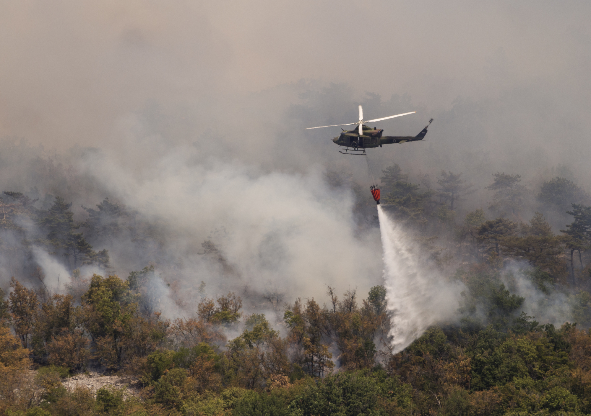 What world leaders are saying about the forest fires in the Amazon