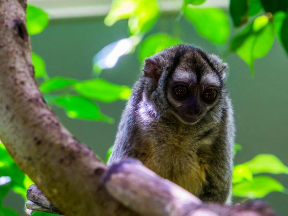 Illegal wildlife trafficking Amazon